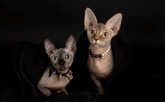 Ювелирные изделия для животных: роскошь или блажь
