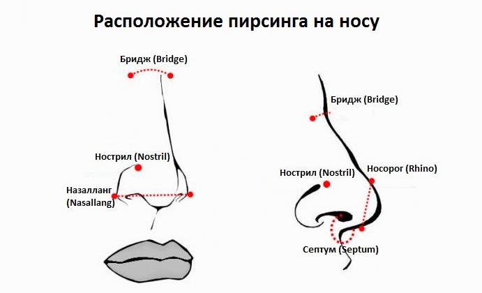 Расположение пирсинга на носу